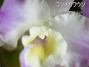 030450_510_2