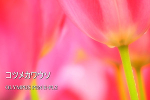 P4220124_pl2
