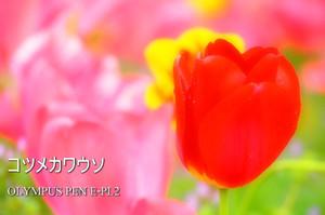 P4220119_pl2