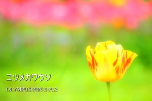P4220120_pl2